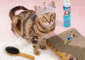Most pets and owners don't enjoy bath time-except Chestnut, thanks to HICC GROOM!